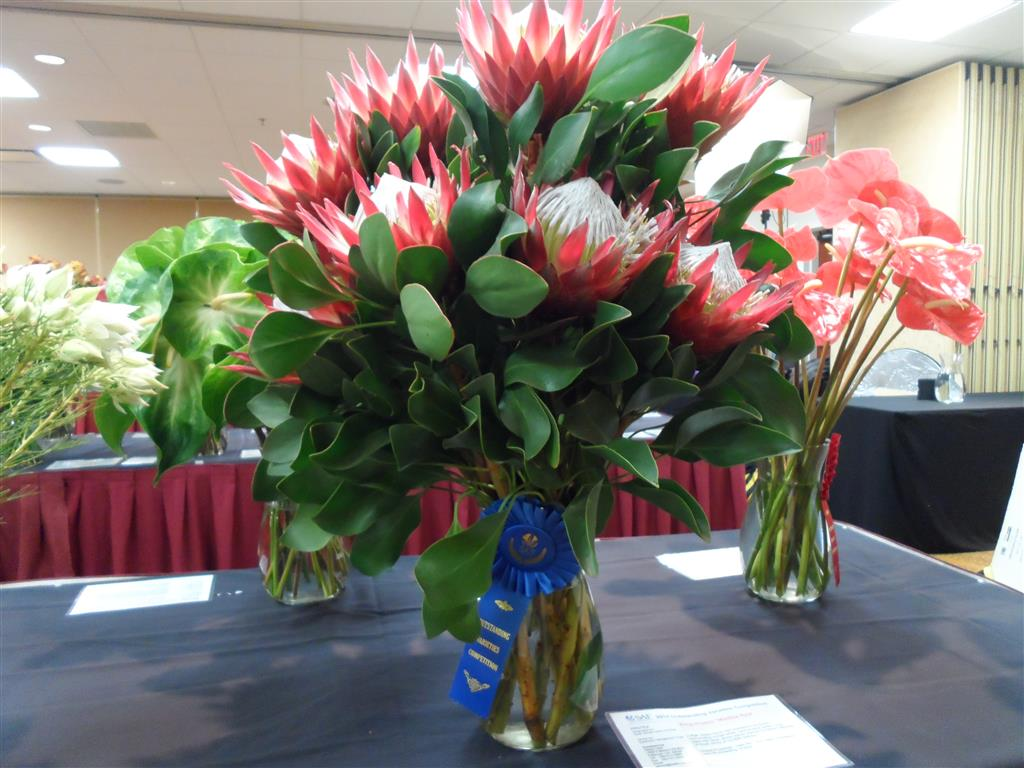 Blue Ribbon Madiba Red King Protea