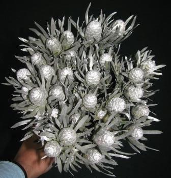 Salignum Tint Silver