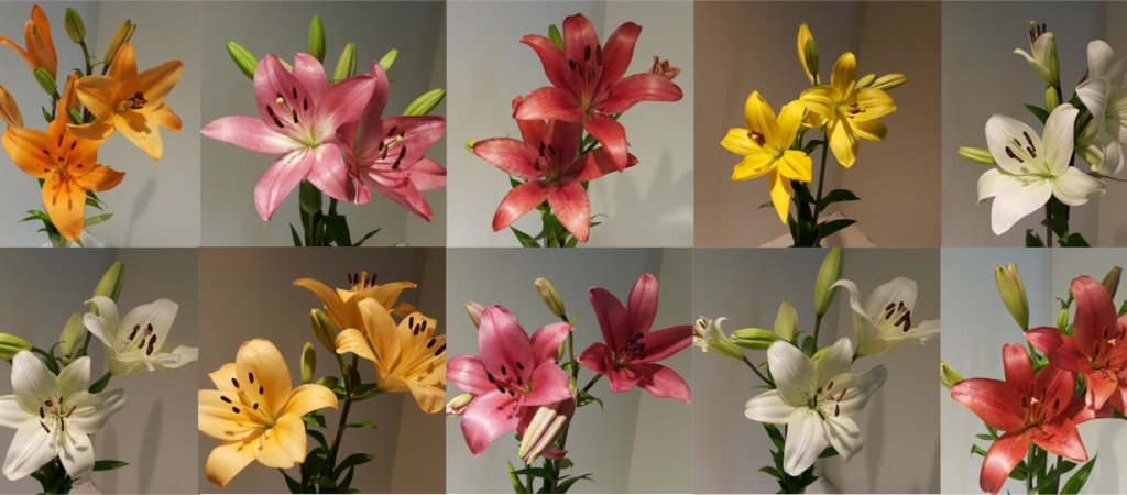 We supply farm fresh Lilies