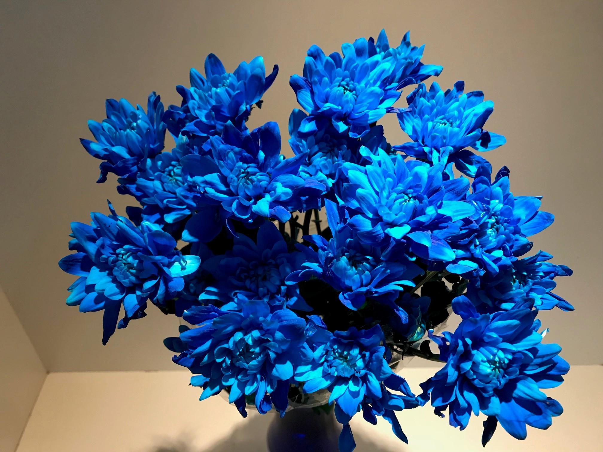tint blue